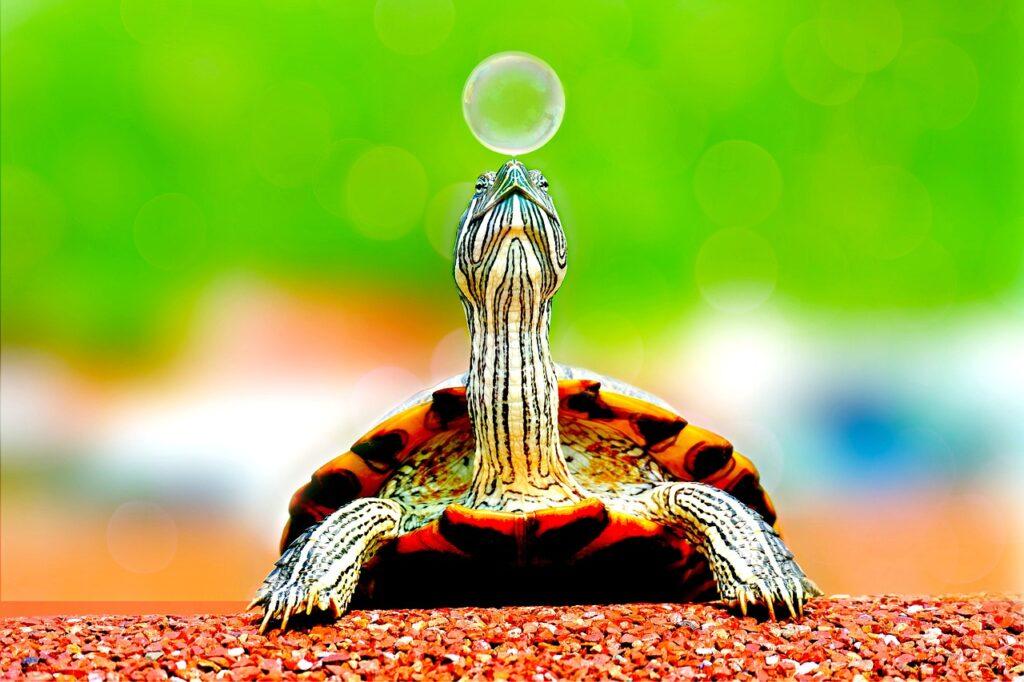 Interpretación de soñar con tortugas