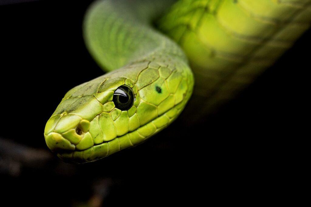 Qué Significa Soñar Con Serpientes Interpretación De Sueños